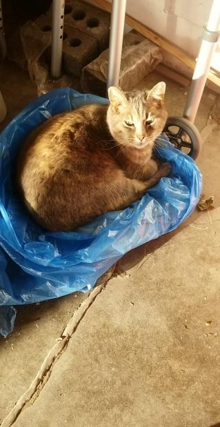my fav farm cat <3